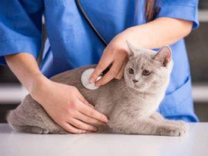 После вязки кошка продолжает просить кота почему