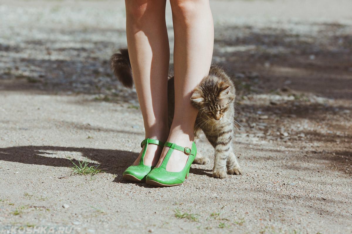 Кошка трется зубами об углы. Причины почему нельзя отгонять кошек когда они трутся об тебя
